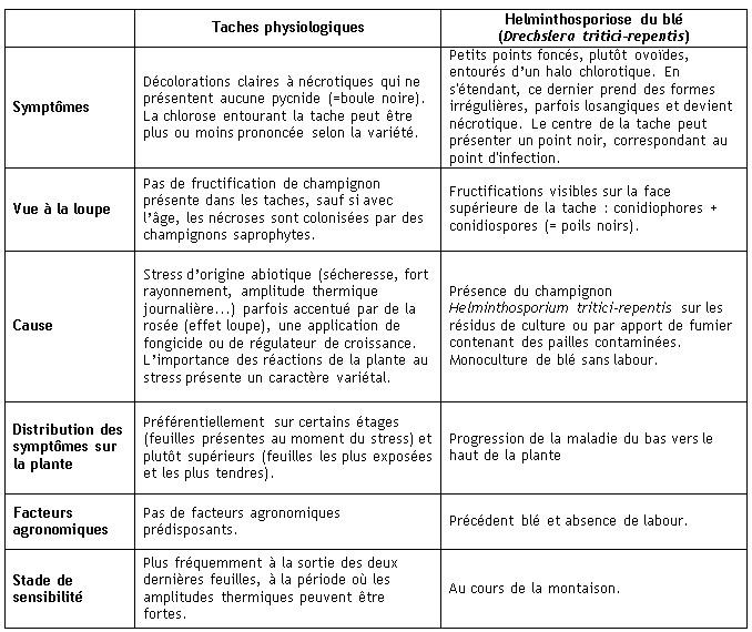 Tableau 1 : Helminthosporiose du blé / Taches physiologiques : attention aux confusions