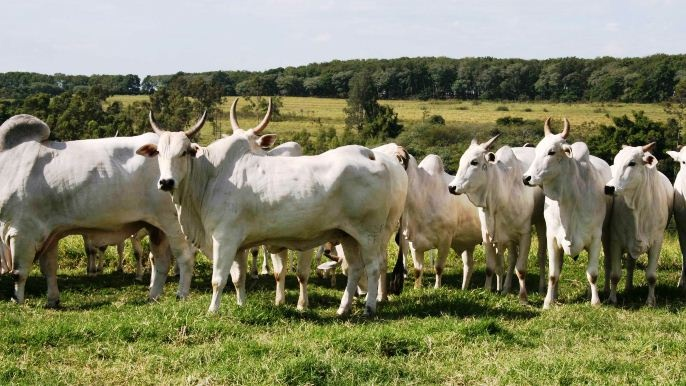 Br�sil - 79,4 Mds d�$ d�exc�dent commercial agroalimentaire en 2012