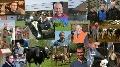Reportages bovins - Les articles et vid�os les plus vus cette ann�e