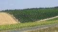 Vci pour les vins blancs Aoc - La liste des appellations autoris�es s�allonge