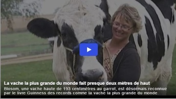 Vache la plus grande du monde
