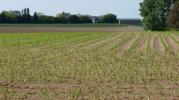 Monsoon active de Bayer �radique gramin�es et dicots en post-lev�e