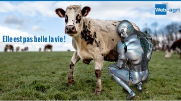 Le robot humanoïde WA-agri02 en pleine traite.