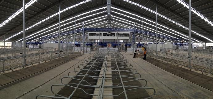 Un bâtiment de dernière génération acceuille les 1500 vaches de cet élevage.