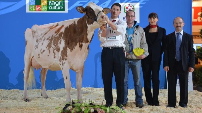 Rainy Eas (Dusk), en deuxième lactation pourrait bien faire honneur aux rouges française à Colmar en 2016.