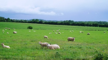 F�d�ration nationale ovine : � pagaille administrative et cacophonie �