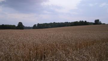 Les cours agricoles � la tra�ne de la reprise des autres march�s