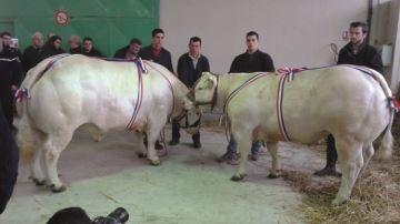 A Saint-Pour�ain-sur-Sioule - Un premier concours sous la banni�re FNCAB