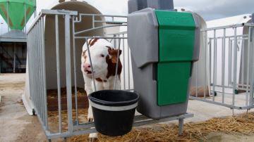 43�% des �leveurs donnent du lait � cellules, mais est-ce une bonne pratique�?