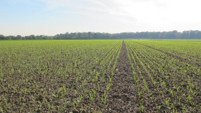 Densit� de semis et quantit� � l'ha - A calculer selon la date, le type de terre et le Pmg