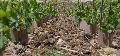 Directive nitrates - Les vignobles en forte pente pourront recevoir de la mati�re organique