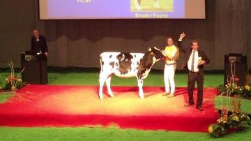 Ventes aux enchères vaches laitières
