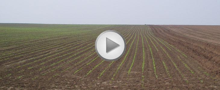 Essai Terre à Terre 2011 - Autoguidage Claas /  Alexandre Ammeux « Améliorer mes prestations de services »