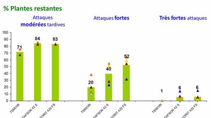 Figure 2: Efficacité des traitements de semences répulsifs sur les attaques de corvidés selon l'intensité des attaques sur maïs (11 essais de 2011 à 2016)