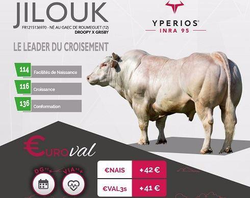 Taureau Yperios d'Auriva élevage avec l'indexation Euroval