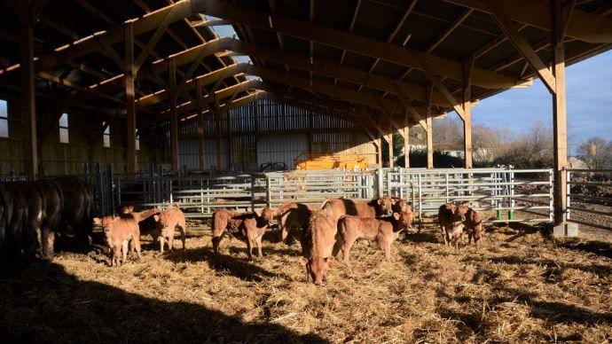 Bâtiment vaches allaitantes dans le Maine et Loire