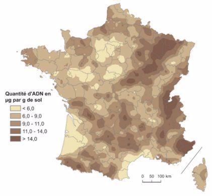 Carte de la quantité d'ADN microbien dans le sol (µg/g de sol)