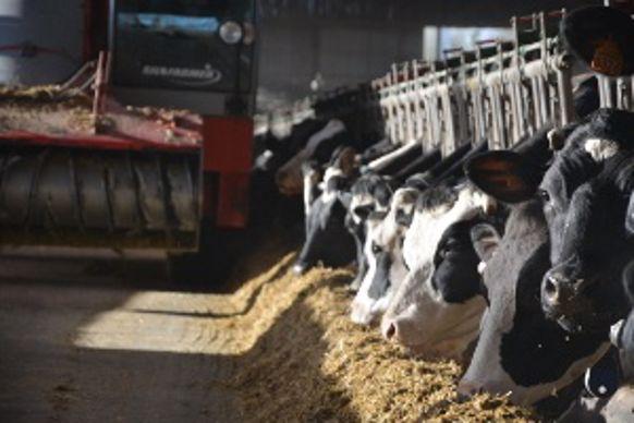 La Saba et les Holsteins d'Abel Lumineau