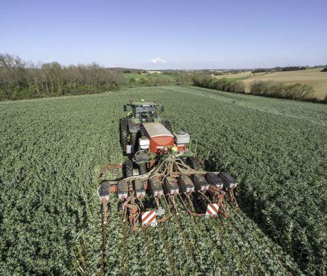 Au début du printemps, l'entreprise sème le maïs avec un écartement de 60 cm à l'aide du Maestro équipé de rouleaux hacheurs pour écraser le couvert.