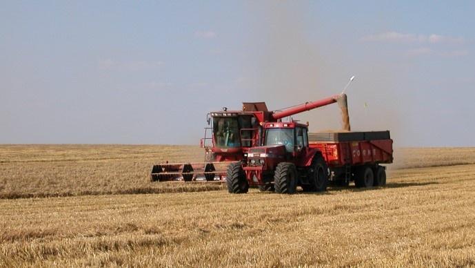 Vidange des grains de blé dans une benne