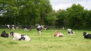 « Nous allons droit vers la crise, tant en lait qu'en viande bovine »