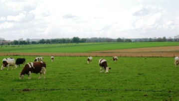 Rapprocher la filière laitière du marché, oui mais à quel prix ?
