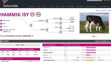 Evolution met en ligne son site web avec consultation des index