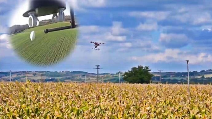 Largage de capsules de trichogrammes par drone.