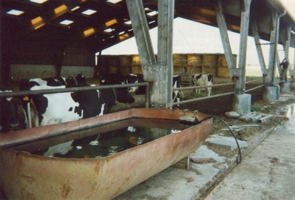 abreuvoir vaches laitières