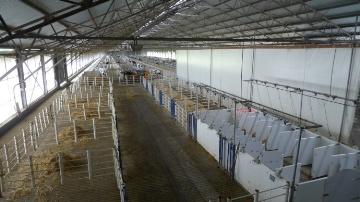 2250 vaches laitières hautes productrices à la ferme Gut Hohen Luckow