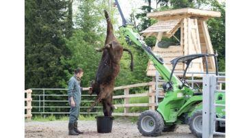 Pour éviter le stress, la Suisse autorise l'abattage à la ferme au fusil