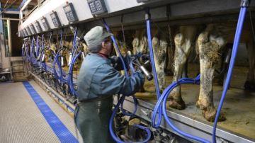 En seulement 9 jours, près de 25% des éleveurs laitiers demandent l'aide