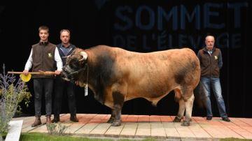 Palmarès concours Aubrac Sommet de l'élevage 2016