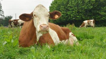 Les fromages en quête de notorieté sur les marchés émergents à l'export
