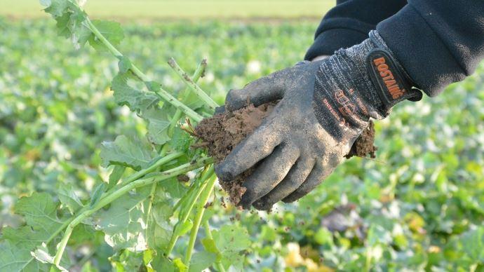 Estimation biomasse entrée d'hiver.