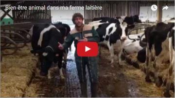 Un éleveur montre le bien-être de ses vaches