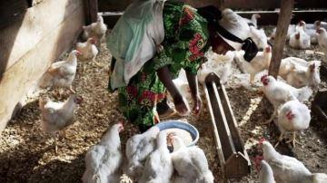 Agnès Koa, Cameroun: «J'ai créé mon label poulet de Nkom Ndamba»