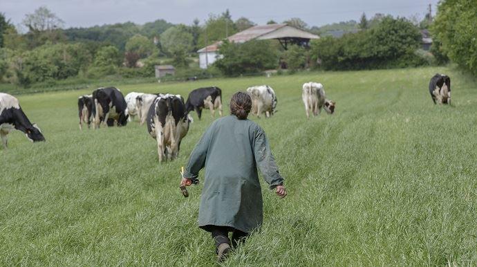 Dans sa tribune publiée ici, Isabelle Clément exprime son désarroi face au nombre de suicides d'agriculteurs et à la situation agricole. (Image d'illustration)