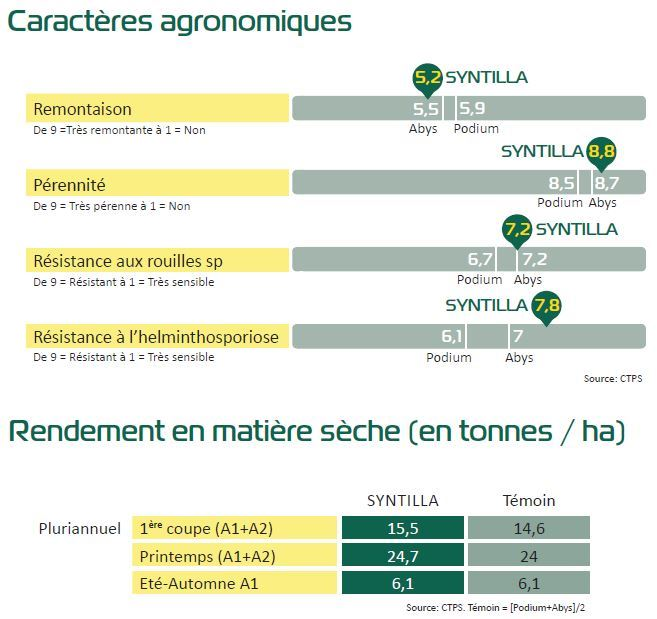 Le RGI Syntilla de Semence de France est une variété inscrite au CTPS.