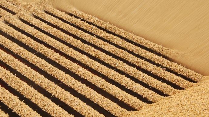 Stockage des grains bio: la liste des produits insecticides s'amenuise