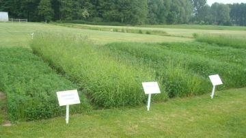 Le progrèsgénétique en plantes fourragères: quel bénéfice pour l'éleveur?