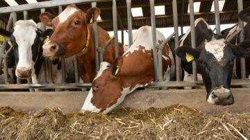 Stress thermique et acidose: le lait et le TB prennent un coup de chaud