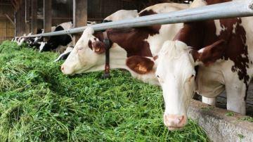 Climalaitaccompagne les élevages laitiers