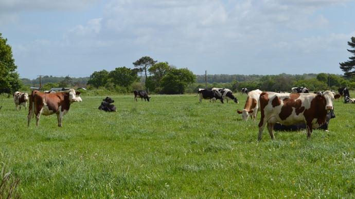 Le plan écophyto touche aussi les exploitations de polyculture-élevage