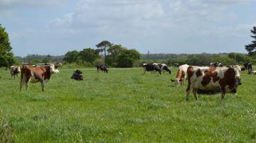 En polyculture-élevage aussi, il faut alléger le poids des phytos