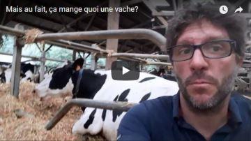 Agriskippy revient en vidéo sur l'alimentation de ses vaches