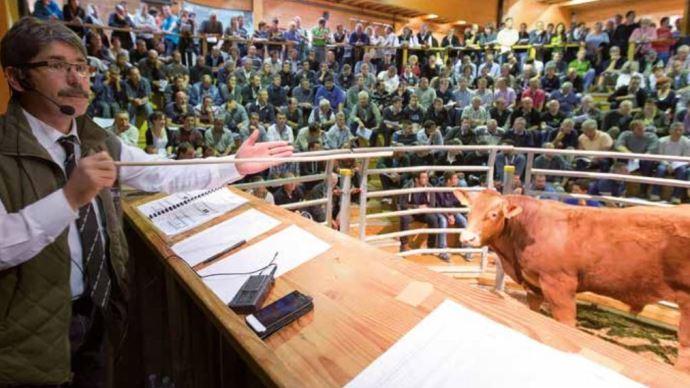 La première vente aux enchères de reproducteurs Limousins qualifiés à Lanaud de la campagne 2017-2018 aura lieu les 15 et 16 novembre 2017