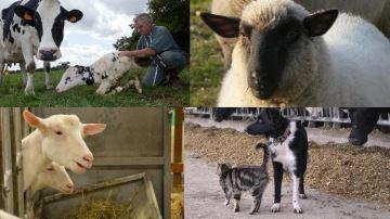 2018: l'année de la lettre O pour nommer veaux,chèvres, brebis, chiens, chats