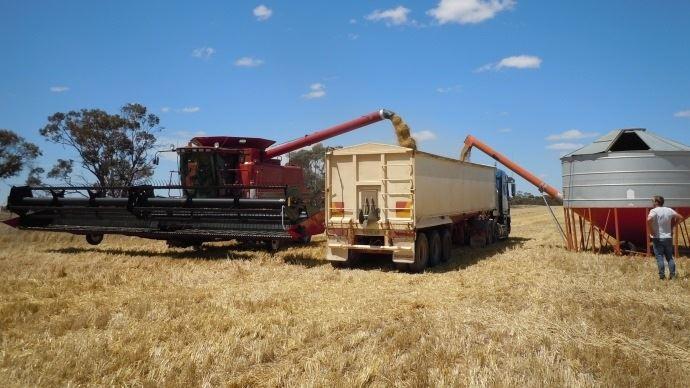 La pluie perturbe les récoltes de blé en Australie