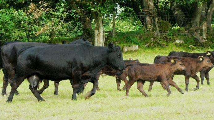 La proposition initiale de la Commission européenne aux pays du Mercosur prévoit l'ouverture d'un quota d'importation de 70000 tonnes de viande bovine.